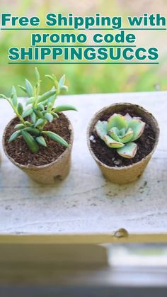 ✔️Order succulents. ✔️Bask in their beauty and calming vibes. ✔️Do literally nothing else. Succulents are hands-down the dreamiest desert plants for your space, not to mention the most low-maintenance. 🌱 Shipped with easy-care instructions, everything in life should be this easy. 💁‍♀️