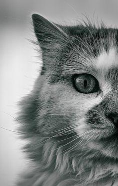 #cats #cute #funny #kitties