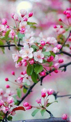 Bonito Flores da primavera: o primeiro dia da primavera é uma coisa, e o primeiro dia da primavera . Flores da primavera: o primeiro dia da p.