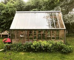"""714 Synes godt om, 7 kommentarer – Signe Wenneberg (@signewenneberg) på Instagram: """"Drivhuset lige nu... . . #drivhus #greenhouse #tomatoes #garden #gardening #signessommerhushave…"""""""