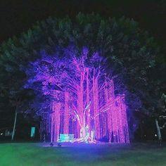 Purple!  #suroita #davao #prayermountain ctto Davao, Prayers, Concert, Purple, Instagram, Prayer, Concerts, Beans, Viola