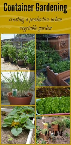 Urban homesteaders: If you're limited on space, container gardening might be the answer. But you've got to choose the *right containers for your small garden plan. plans Container Vegetable Gardening for Beginners - Attainable Sustainable Growing Vegetables In Containers, Container Gardening Vegetables, Container Plants, Vegetable Gardening, Veggie Gardens, Succulent Containers, Succulent Planters, Container Flowers, Succulents Garden