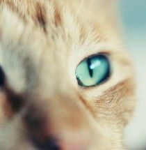 aw, blue eyes! so rare for a cat after they're grown.
