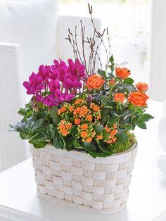 View our complete range of flower bouquets from Mimosa Flowers Belfast, Dublin, Cork, Fall Flowers, Flower Arrangements, Planter Pots, Bouquet, Happy Birthday, Sunset