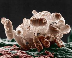 Animal Legal Defense Fund:Legally Brief: Drug-Resistant Superbugs & Other Shocking Ag Industry Secrets