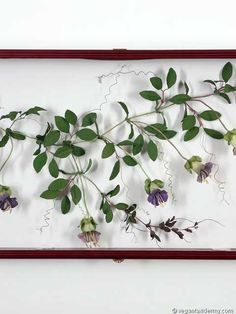 Cup and Saucer Vine (Cobaea scandens), 3-D crepe paper sculpture by Aimée Baldwin