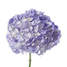 Petite lavender hydrangeas a great flower at a great deal! $109.99