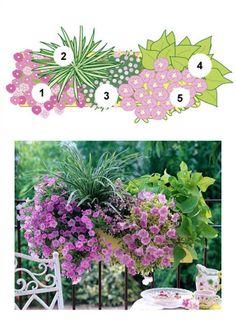 Blumenkasten mit Zauberglöckchen, Japan-Segge, Elfenspiegel, Süßkartoffel, Hänge-Petunie