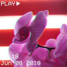 #vhs #aesthetic #vaporwave #flower