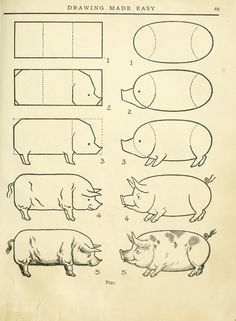 Drawing made easy : a helpful book for young artists; the way to begin and finish your sketches, clearly shown step by step #pig #drawing