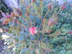 Futuras flores