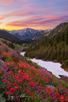 expressions-of-nature:  Badger Valley Wildflowers | Olympic National Park, Washington State | Gary Luhm