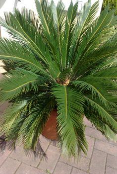 1000 Images About Plantas De Sombra On Pinterest