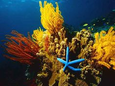 Coral reefs are underwater structures made from calcium carbonate secreted by corals. Coral reefs are colonies of tiny living animals found in marine waters
