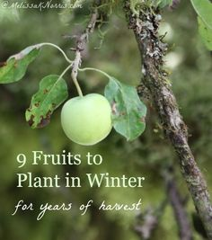 These 9 fruits are planted in winter and will provide you with a harvest for years to come. Tips on where to get your stock, how to plant it, even if you don't have any land or a yard! Read this to get your fruit plants in. Fruit Plants, Fruit Garden, Garden Trees, Edible Garden, Garden Plants, House Plants, Organic Gardening, Gardening Tips, Gardening Books
