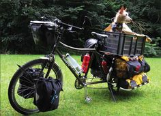 How to Take Your Dog on a Bicycle Ride | The Bark
