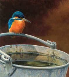 Find highest quality stock images, illustrations and art works created by Andrew Hutchinson. Funny Birds, Cute Birds, Watercolor Bird, Watercolor Paintings, Tier Fotos, Bird Pictures, Colorful Birds, Kingfisher, Wildlife Art