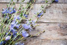 Ha az egészségünk, fittségünk visszaszerzése cél, érdemes megfogadni Gyuri bácsi tanácsait! Plants, Plant, Planets