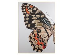 https://www.ohcielos.com/cuadro-mariposa-colores.html