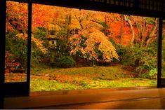 京都紅葉 瑠璃光院 kyoto japan autumn maple leaves