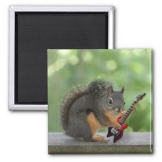 SOLD 2 Squirrel Playing Electric Guitar Refrigerator Magnets by FunNaturePhotography. #guitars #music #magnets #squirrels http://www.zazzle.com/funnaturephotography*