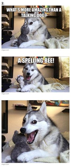 7 Pun Dog Puns That Will Instantly Brighten Your Day! From Daily-Entertainment
