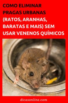Veneno para rato aprenda 5 receitas caseiras LAMINATED FLOOR CLEANING – Tips from Lucyos and other materials through their droppings or may even cause fires when gnawing on electrical cables. Mata Mosquito, How To Clean Laminate Flooring, Green Bin, Vacuum Cleaner Accessories, Drill Brush, Wash Brush, Clean Microfiber, Green Cleaning, Washing Clothes