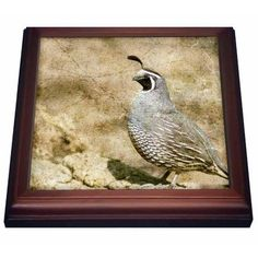 3dRose California Quail With Textures, Trivet with Ceramic Tile, 8 by 8-inch