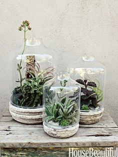 A terrarium is a good option if your mom isn't big on blooms or if you want something that will last longer. Customize the vessel shape and succulents used. Succulent Terrarium, Cacti And Succulents, Planting Succulents, Planting Flowers, Succulent Ideas, Garden Terrarium, Indoor Garden, Garden Plants, Indoor Plants