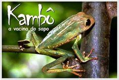 Kambo - Healing Frog