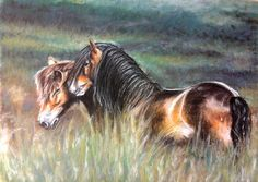 Exmoor Ponies, soft pastels 61x45 cm, based on the photo made by Katarzyna Okrzesik Photography