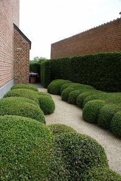 Osmantus /Tuinontwerp: groene tuin op zware kleigrond