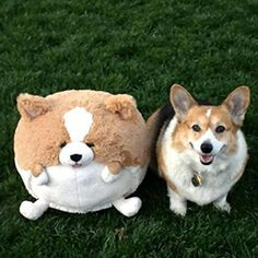 Squishable Corgi: An Adorable Fuzzy Plush to Snurfle and Squeeze!