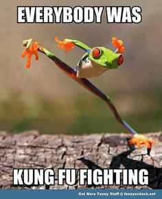 "Kungfu frog by shikhei goh. Shouldn't the ""Kung Fu Fighting"" song be playing for this guy? Funny Animal Memes, Animal Quotes, Cute Funny Animals, Funny Animal Pictures, Funny Cute, Hilarious, Funny Pics, Cat Memes, Kung Fu"