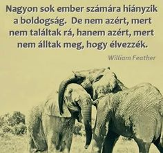 Fotó Picture Quotes, Elephant, Inspirational Quotes, Animals, Buddhism, Einstein, Zen, Touch, Animales