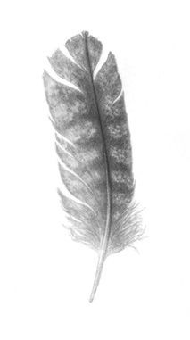 turkey feather tattoo - Google Search
