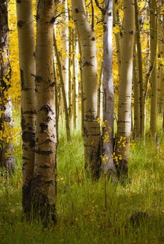In the Aspens by Mary Alston