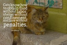 Cats know how to obtain food without labor shelter without confinement and love without penalties. -Walter Lionel George (author A Bed of Roses) #dogs #cats
