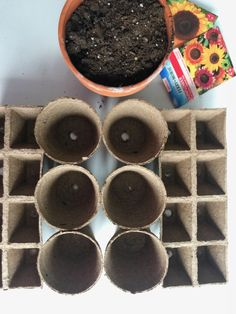 How to grow sunflowers from seeds! Want to grow an eye-catching and budget friendly garden this summer? Use my step-by-step guide on how to start, grow, and plant sunflowers from seeds for beautiful blooms throughout the summer! Planting Sunflower Seeds, Sunflower Seedlings, Planting Sunflowers, Sunflower Garden, Flowers Garden, Planting Seeds, Flower Gardening, Sun Flowers, Blooming Flowers