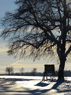 Wintry, Tree, Away, Evening