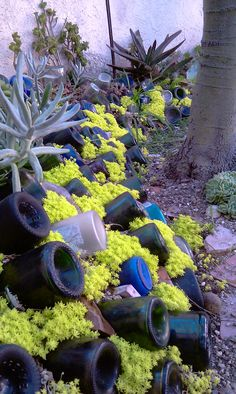 Bottle wall with succulents