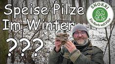 Speise Pilze im Winter - Austernseitling und Samtfußrübling ohne Ende