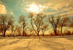 Winterlight - Pink Sherbet Photography