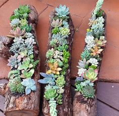 10 Amazing Upcycled Planters That Show Off Your Succulents Succulent Landscaping, Succulent Gardening, Succulent Terrarium, Container Gardening, Succulent Ideas, Vegetable Gardening, Organic Gardening, Succulents In Containers, Cacti And Succulents