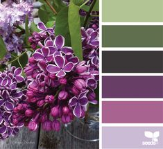 Design Seeds, for all who love color. Apple Yarns uses Design Seeds for color inspiration for knitting and crochet projects. Colour Pallette, Color Palate, Colour Schemes, Color Combos, Color Patterns, Green Palette, Design Seeds, Color Swatches, Color Theory
