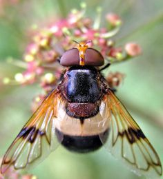 Bees signify 'Hard Work & Communication'