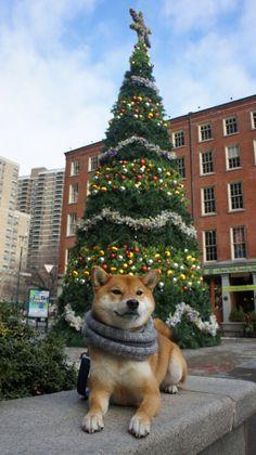 happygoriley: Holidays look good on me. - HappyGoRiley