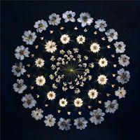 Brautstrauss konserviert, Blütenmandala, Brautstrauss trocknen Alternative, florale Kunst