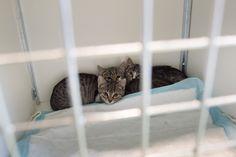Kittens net wakker na sterilisatie voor #poezencentrale Mol. #kitten #operatie