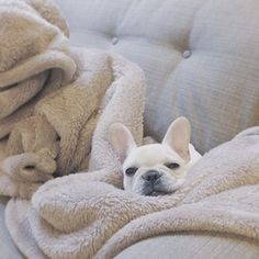 """Q: """"What makes you feel luxurious?"""" 